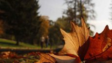 calor, otoño, clima, pronóstico