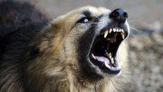 perros callejeros, Lomas de Zamora, salud